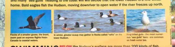 HudsonRiverbirds