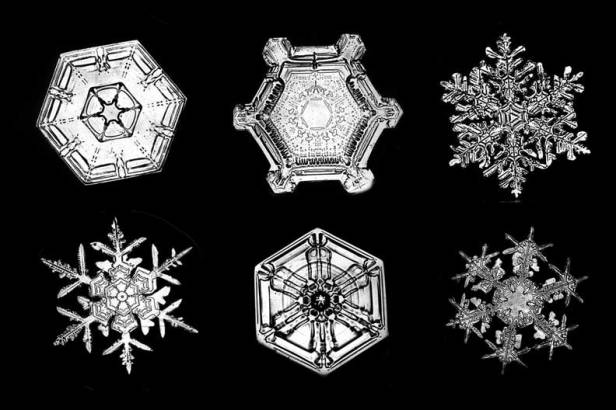 bentley martin pin books snowflake things briggs by all jacqueline book