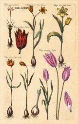 Botanical sketches from Herb Book, Valentini, M. B. (1719). Public domain image via Flickr